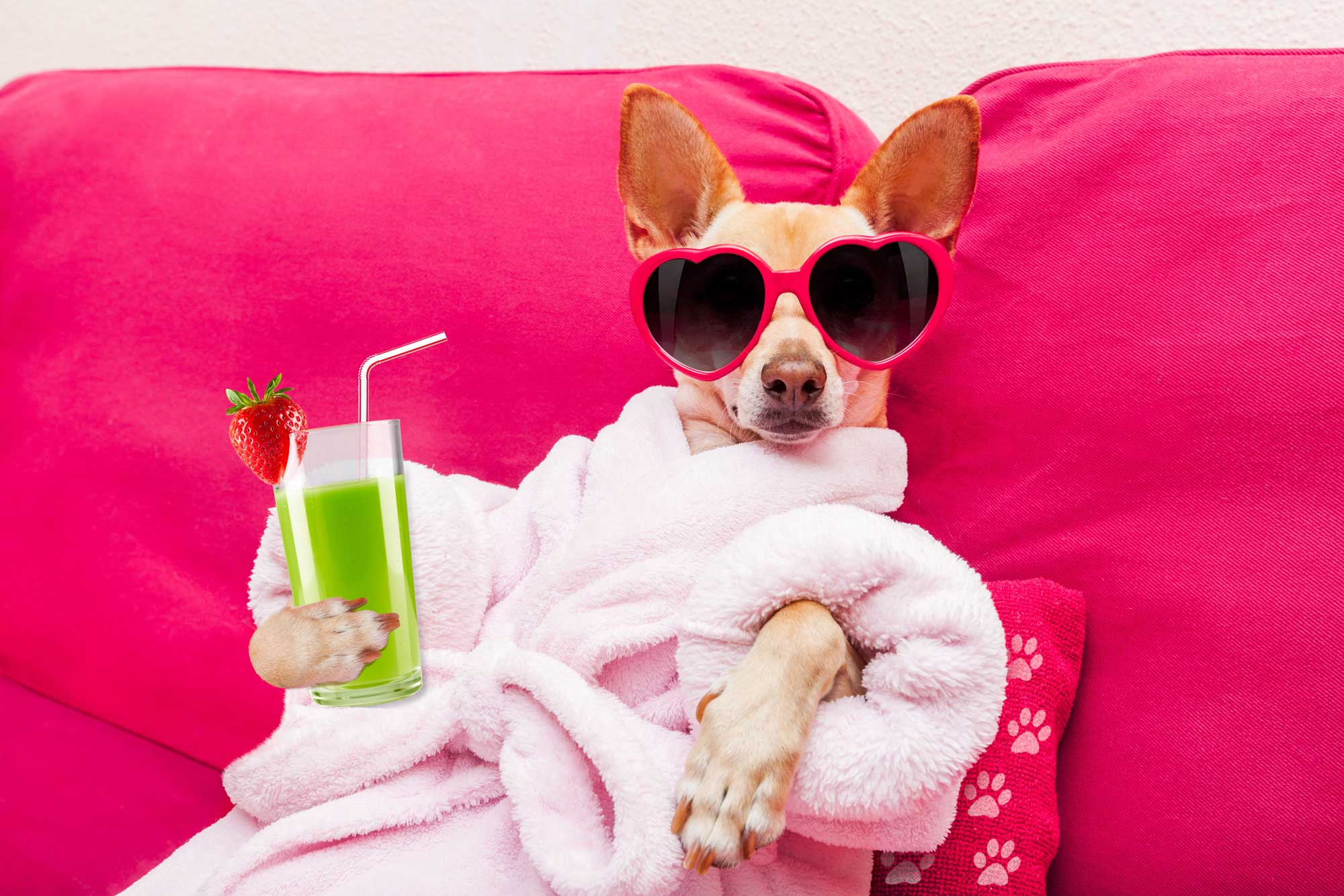 How To Make Your Dog Relax